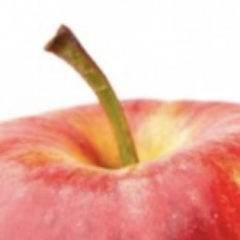 애플 니콜라테슬라